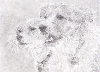 Potlood portret van jouw huisdier 40 x 60cm