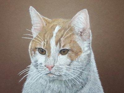 Pastel portret van jouw huisdier 30 x 40cm