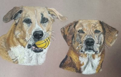 Pastel portrait of your pet 40 x 60cm
